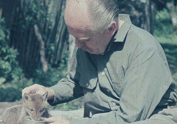 Kisszépalma, rókakölyök Szabó Istvánnal 1966